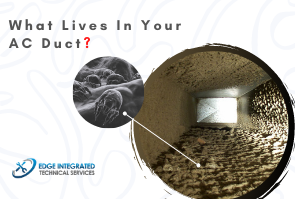 What lives in your Duct?
